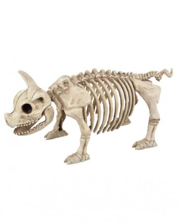 Ferkel Skelett