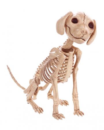 Sitzendes Hundeskelett 30 cm