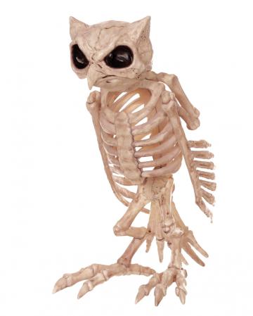 Skelett Eule