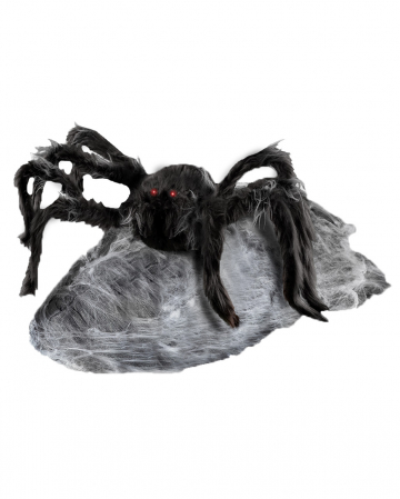 Giant jumping spider 90cm