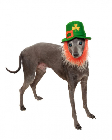 St. Patricks Day hat with beard for dogs