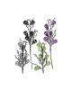 Langstielige Totenschädel Blume