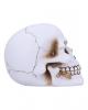 White Skull With Golden Rose